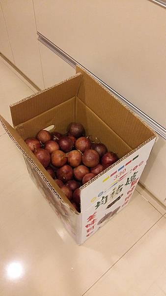 1041008爸買一箱百香果