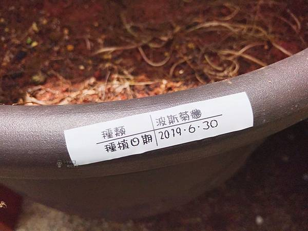 S__37019709.jpg