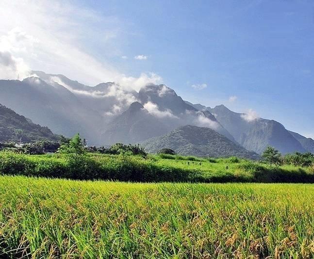 rice_Taitung4.jpg