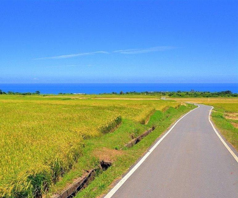 rice_Taitung5.jpg