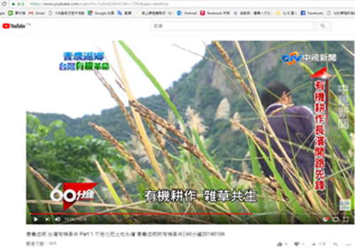 rice_Taitung01.jpg