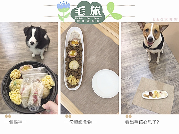 dogfood_fresh.jpg