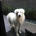 big_bear2.jpg