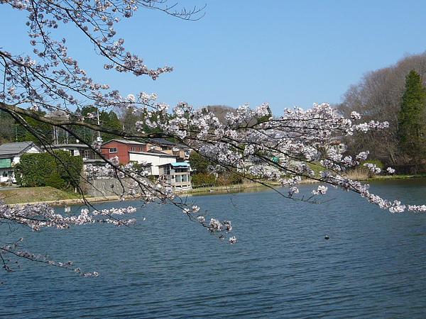 益子小湖一景