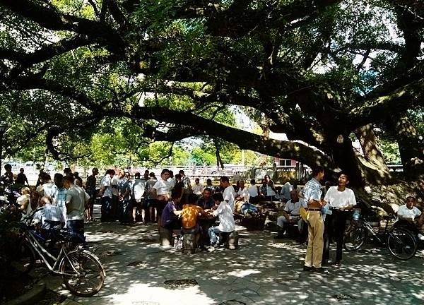 榕树下.jpg