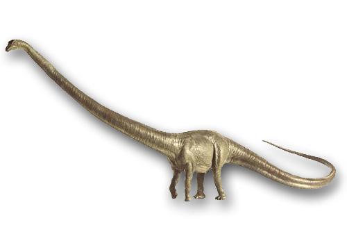 Barosaurus_DKmodel_1-1