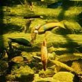 水族館-倒立的魚1