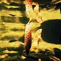水族館-倒立的魚2
