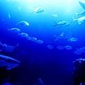 水族館-魟與魚群