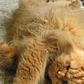 King躺著睡覺