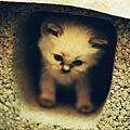 小貓仔躲在空心磚裡