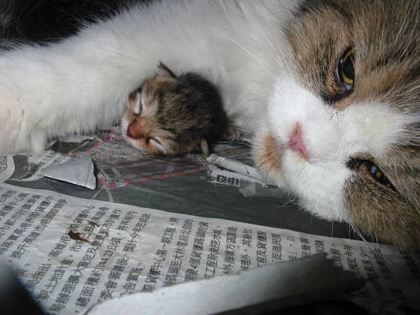 毛球抱艾兒睡覺.jpg