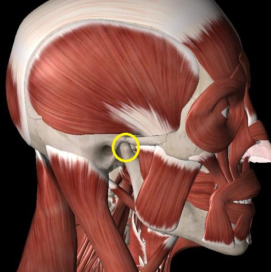 TMJ anatomy.jpg