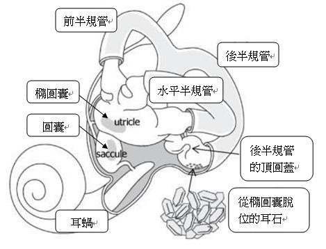 inner ear chinese.jpg