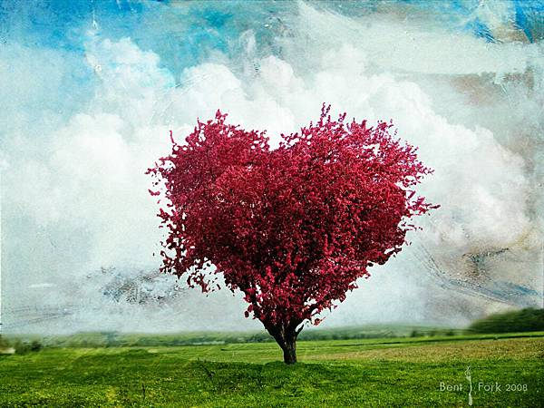 Love_tree_Wallpaper_ofdgi