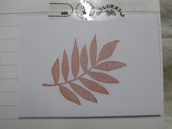 no.36葉