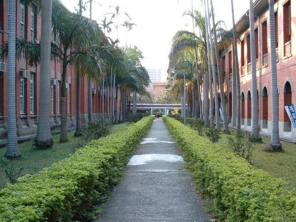 法學院椰林大道