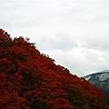 20101027_079.jpg