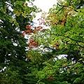 20101025_371.jpg