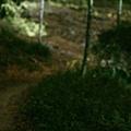 20100417_006.JPG