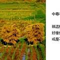 20101029_505.jpg