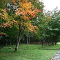 20101027_272.jpg