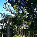 20101029_576.JPG