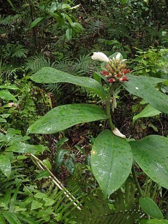 20110706帛琉