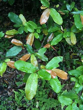 20120531_台北植物園_2