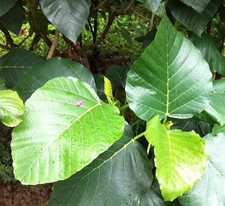 20131229台北植物園_5