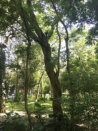 20160529台北植物園_5