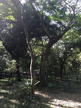 20160529台北植物園_3