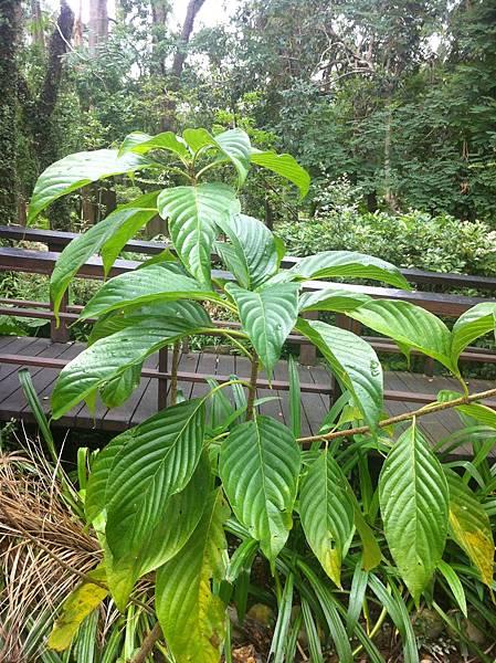 20151011台北植物園
