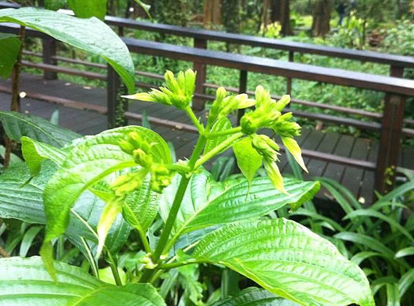 20160103台北植物園