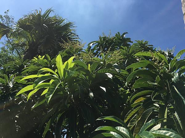 20160617高雄熱帶植物園_3