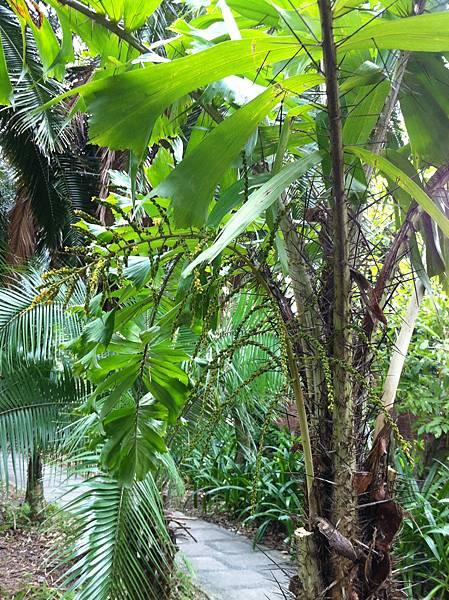 20151031植物園_3
