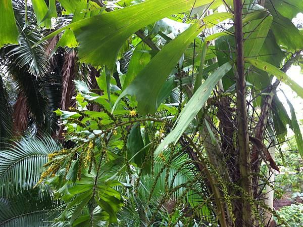 20151031植物園_2