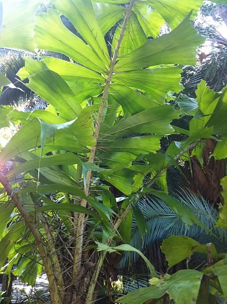 20150113植物園_4