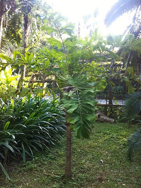 20150113植物園_3