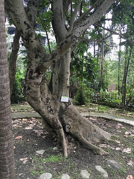20160528台北植物園_4