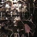 0628安省皇家博物館-一堆動物的角XD
