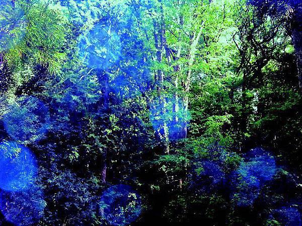 主圖:樹林精靈.jpg