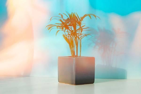 blurred-background-bright-close-up-2249962.jpg