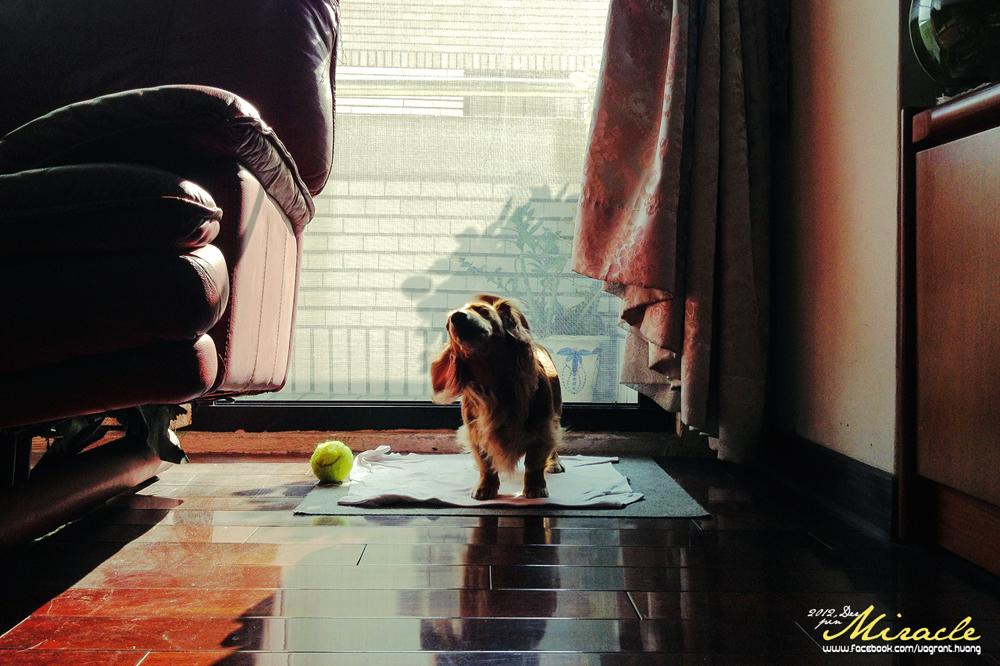 2012.DER. DOG (2)