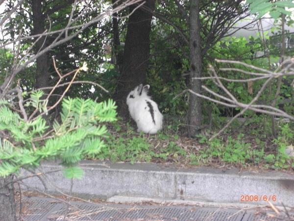 不知道為什麼在公園有亂跑的兔子