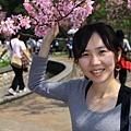 0228 粉紅色櫻花