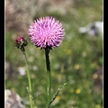 草原上的小花