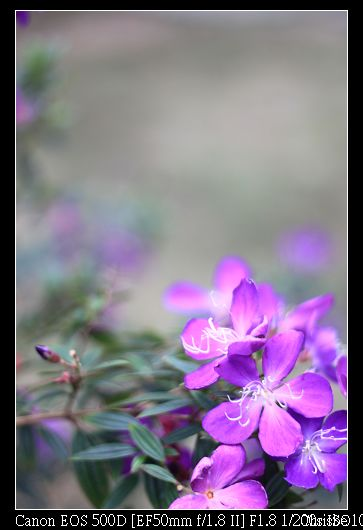 1124 路旁的小花 散景很美麗