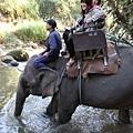 大象要喝水
