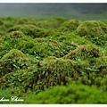 突起的水草小丘
